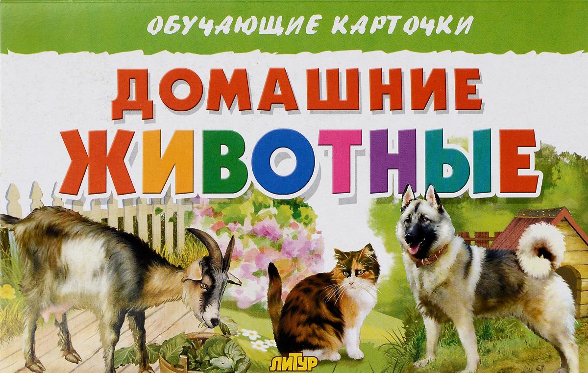 Домашние животные. Обучающие карточки