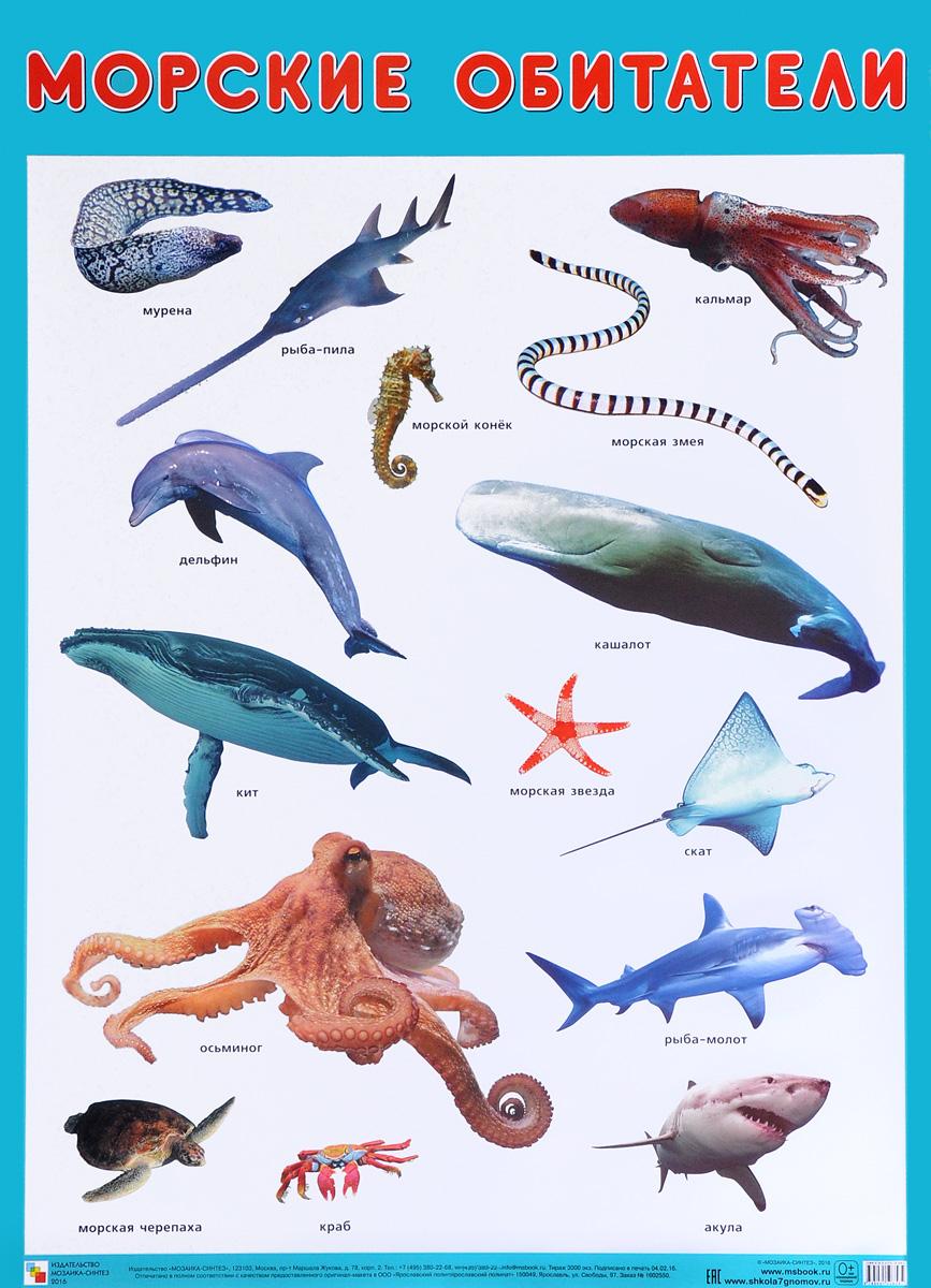 Морские обитатели. Плакат