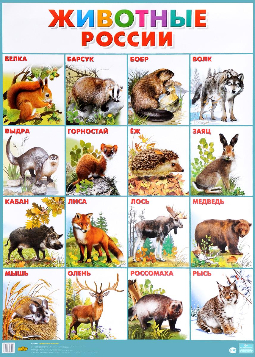 Животные России. Плакат
