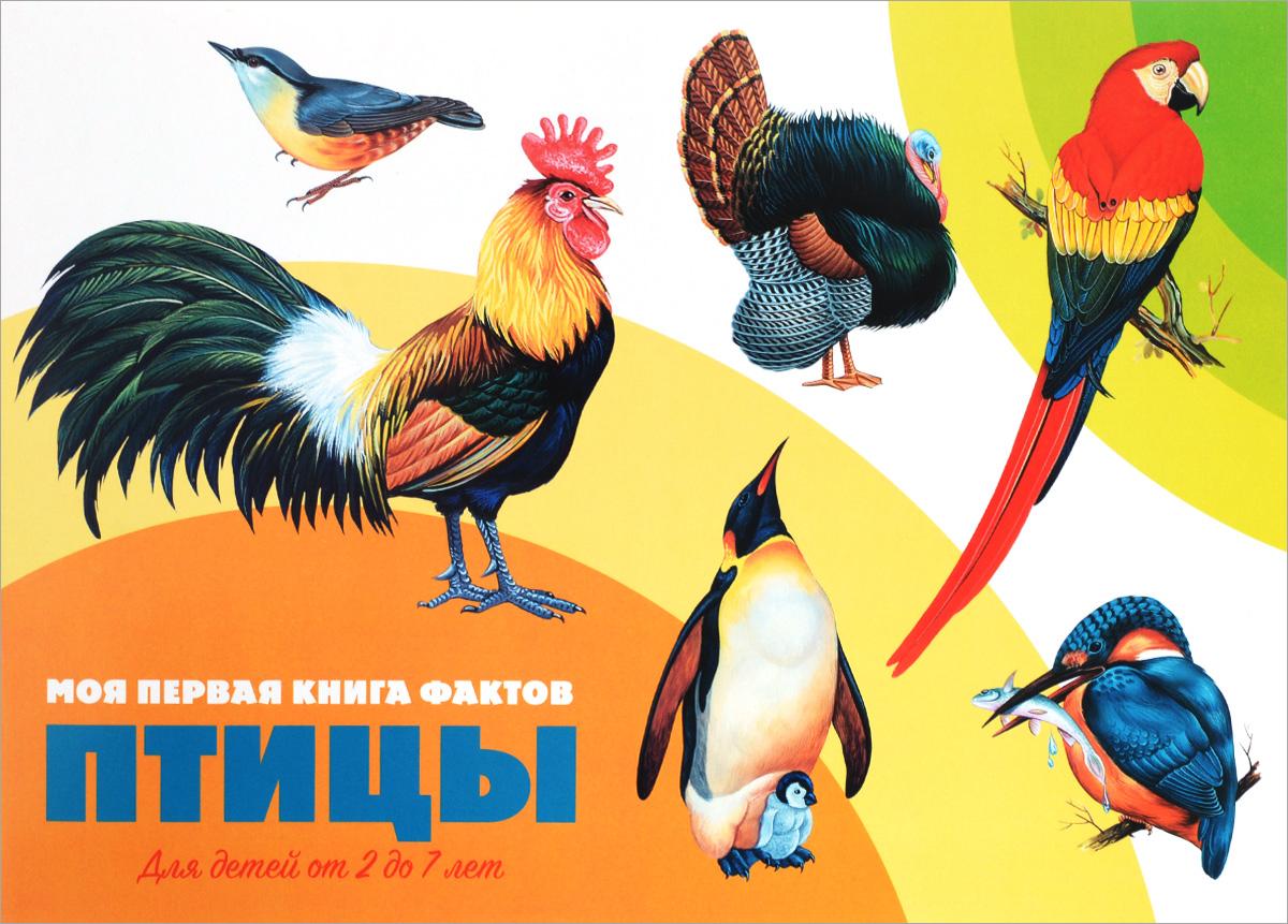 Птицы (+ наклейки)