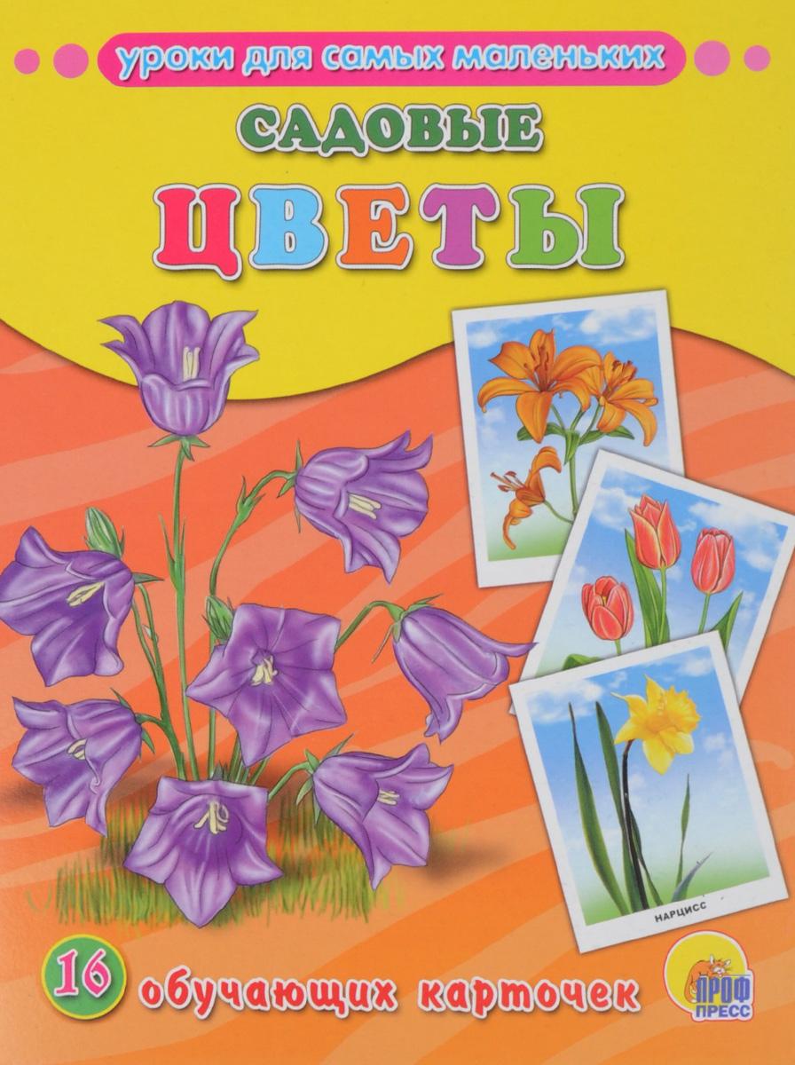 Садовые цветы (набор из 16 обучающих карточек)