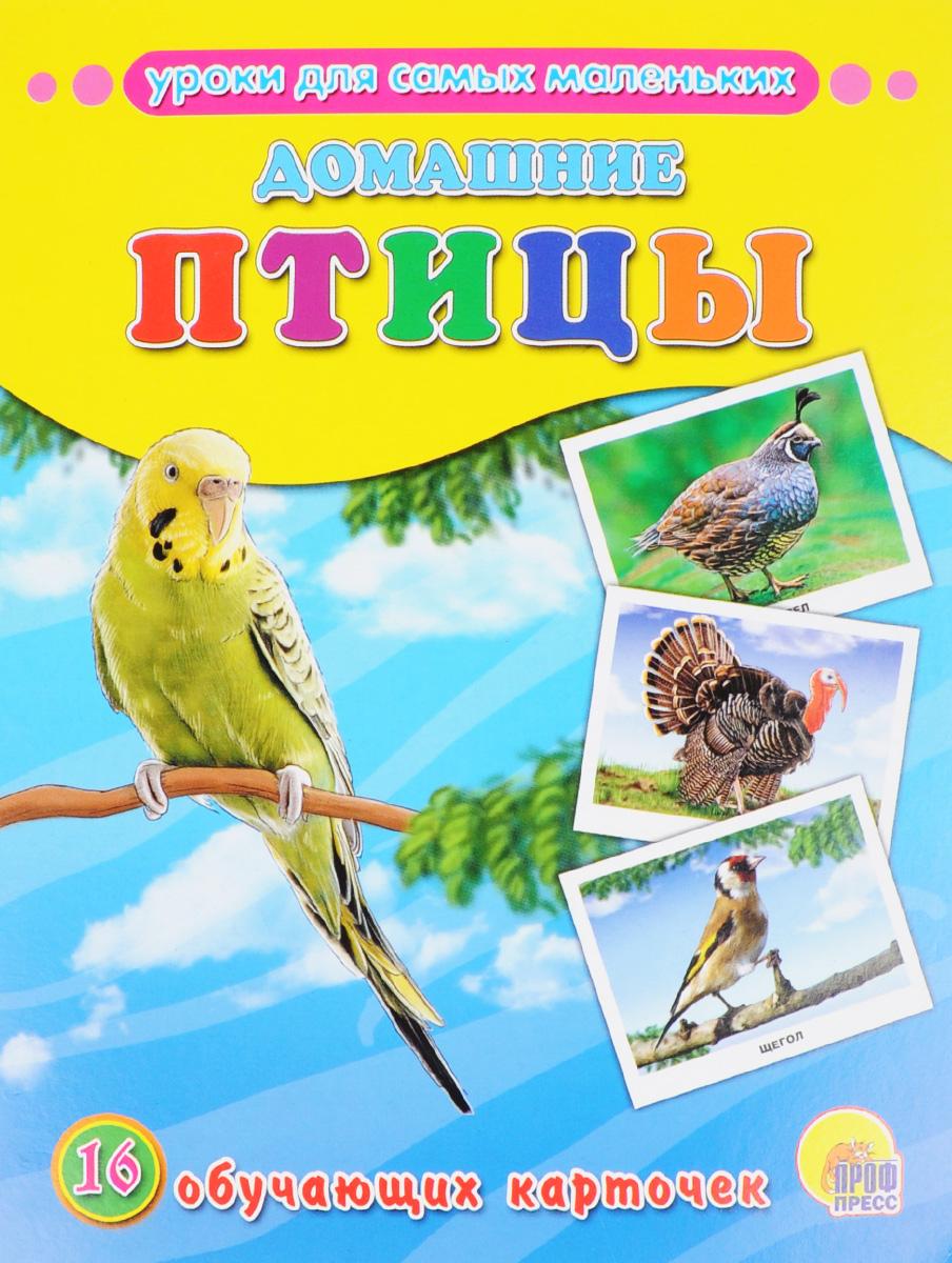 Домашние птицы (набор из 16 обучающих карточек)