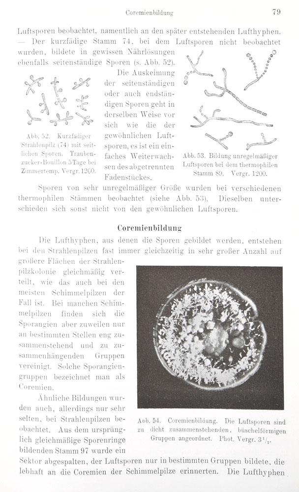 Morphologie und Biologie der Strahlenpilze (Actinomyceten)