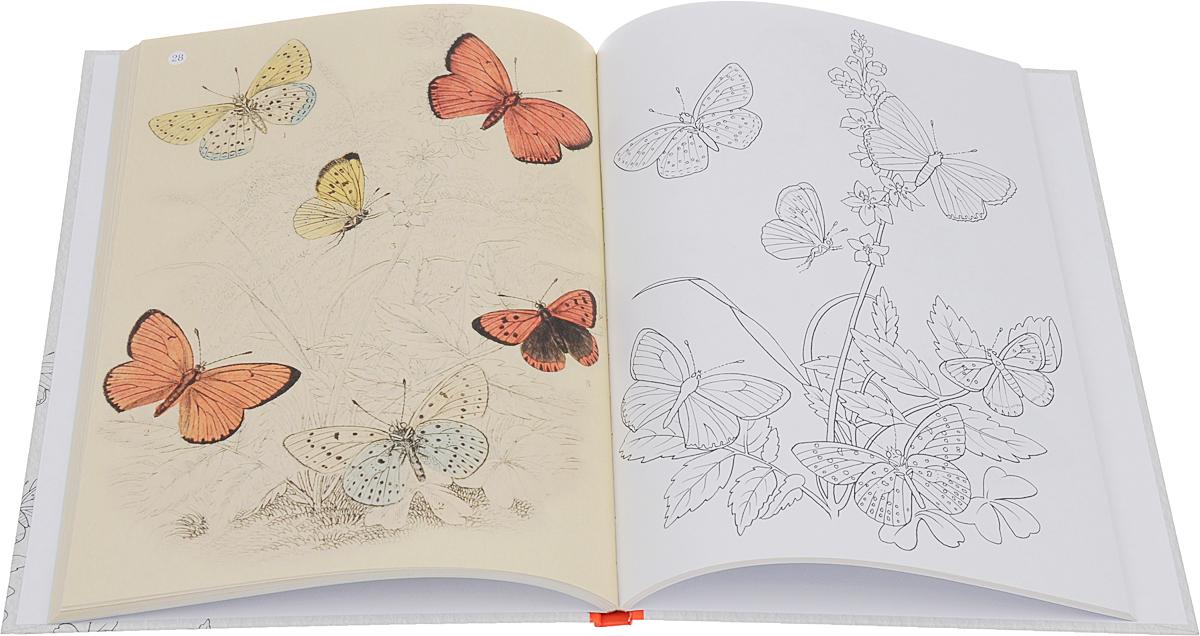 Экзотические бабочки в естественной среде обитания. Особенная раскраска