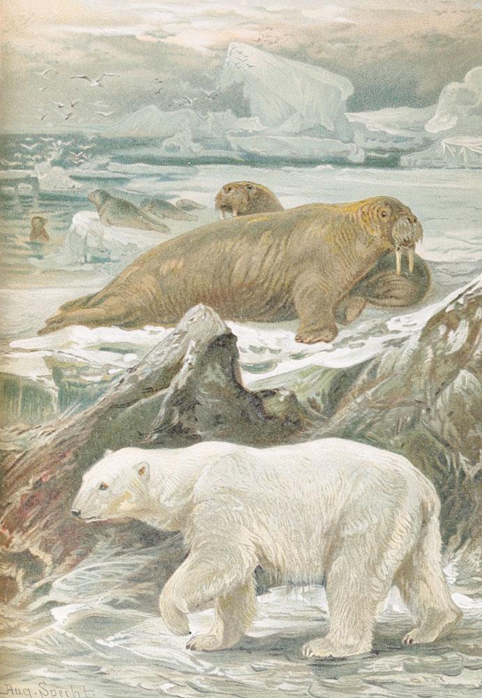 Географическое распределение животных в холодном и умеренном поясах северного полушария