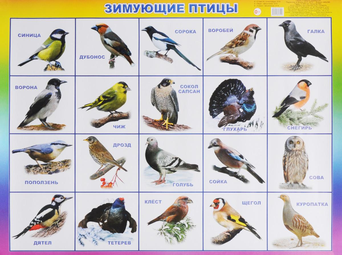 Зимующие птицы. Плакат12296407Разрезной плакат познакомит детей с различными видами зимующих птиц: снегирем, голубем, тетеревом и другими. Четкие, яркие иллюстрации обязательно заинтересуют ребят и помогут усвоить новые знания. Наглядный материал может быть использован на занятиях по ознакомлению с окружающим миром, для развития речи и мышления.