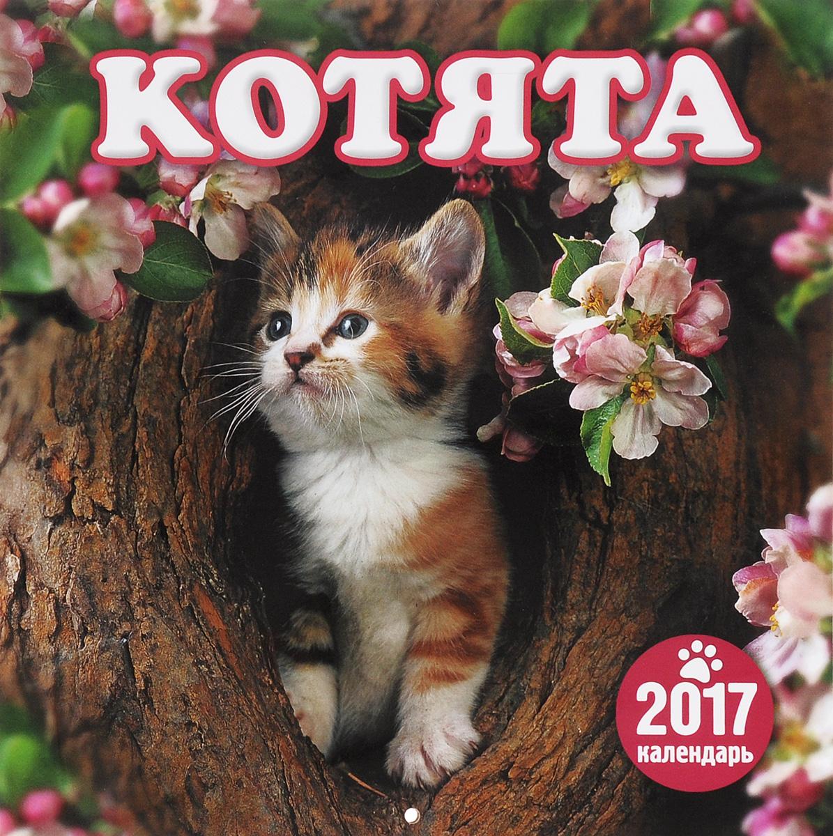 Перекидной календарь на 2017 год. Котята ( 4620011169686 )