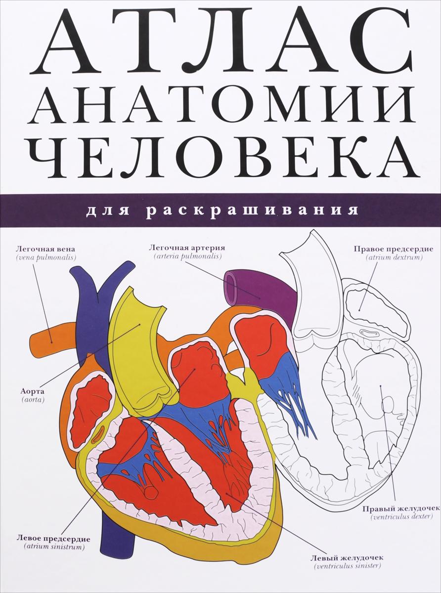 Атлас анатомии человека для раскрашивания