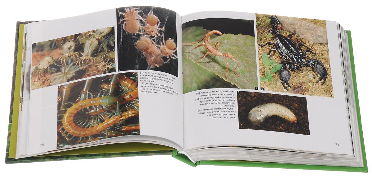 Наши любимые животные (комплект из 2 книг)