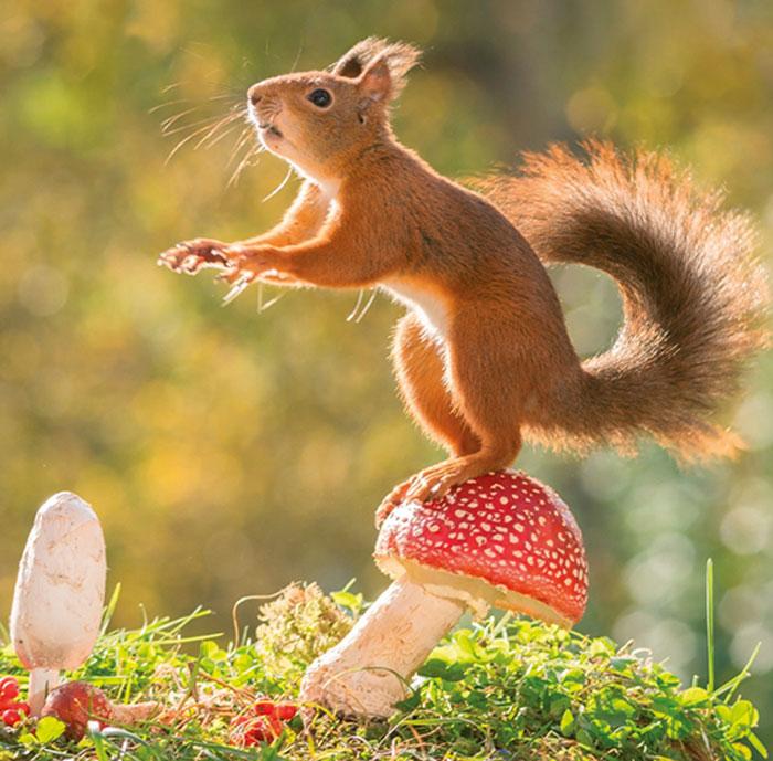Календарь 2017 (на спирали). Squirrel Stories (+ наклейки)