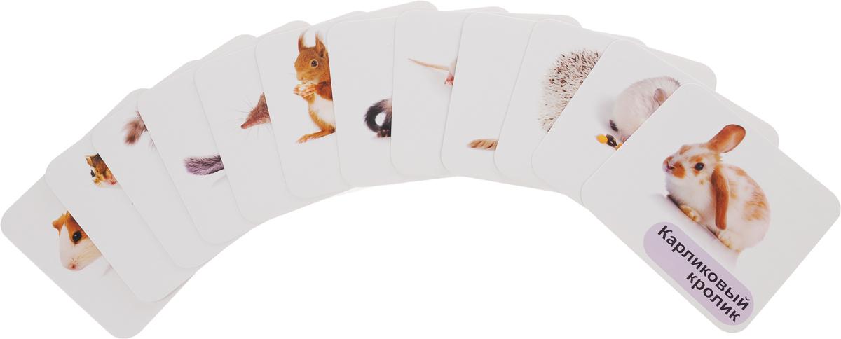 Животные-питомцы (набор из 12 развивающих карточек)