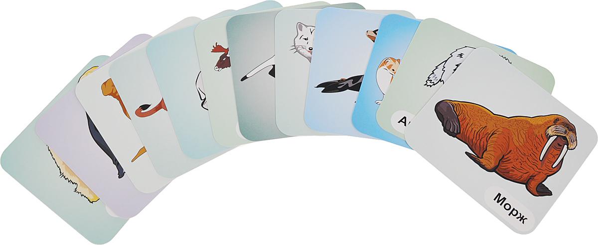 Животные севера (12 развивающих карточек)