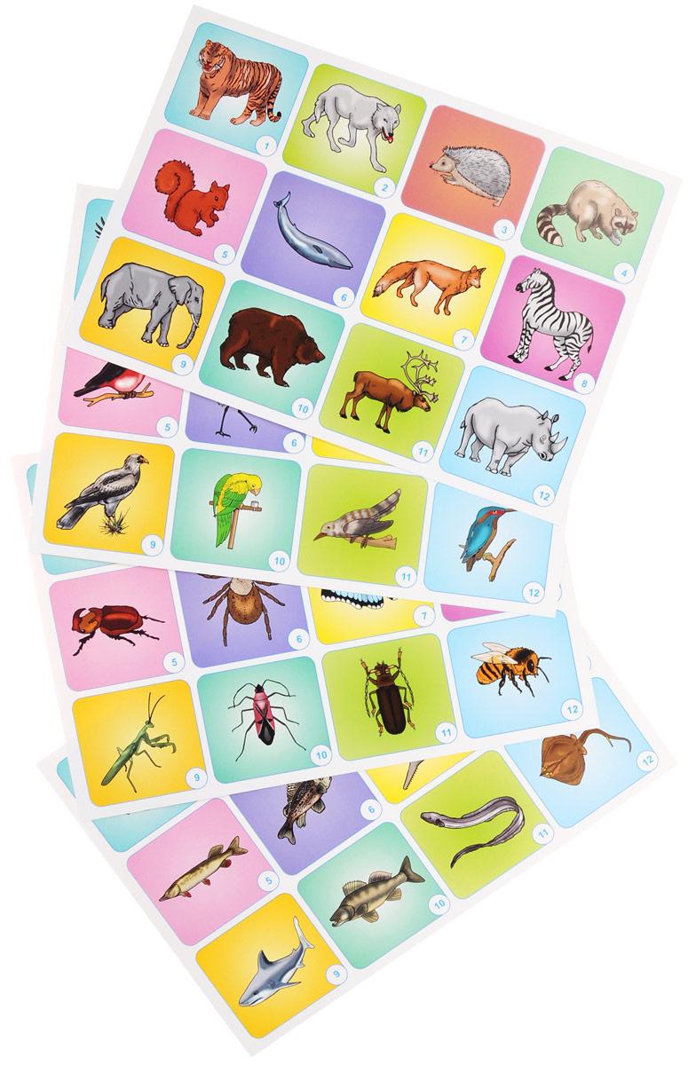 Животные (комплект из 4 плакатов)