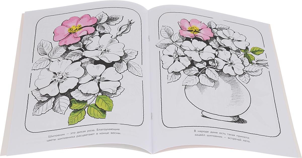 Цветы из сада. Альбом для раскрашивания