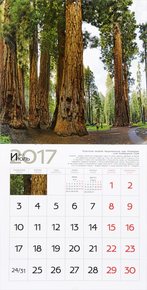 Календарь 2017 (на скрепке). Удивительные деревья / Amazing Trees