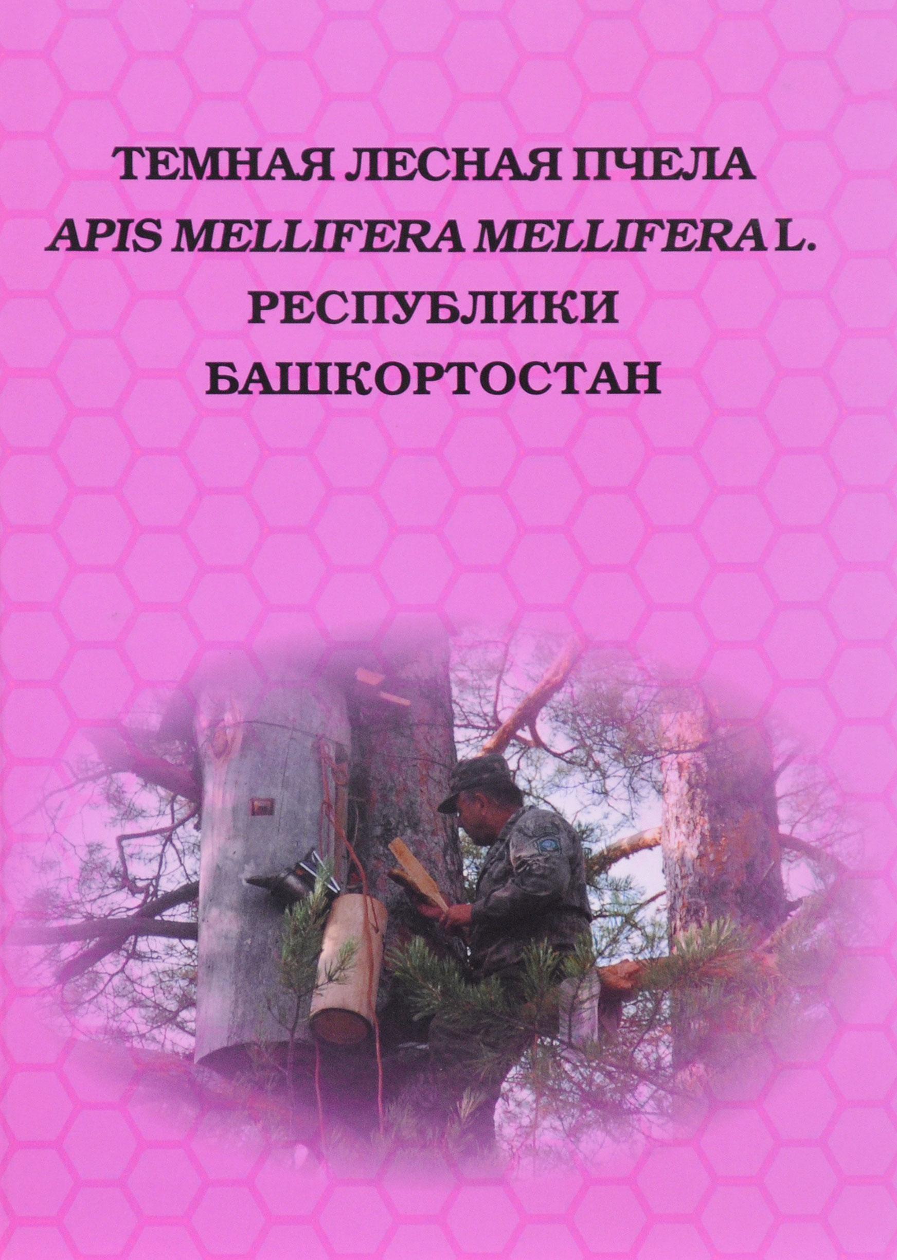Темная лесная пчела Apis mellifera mellifera L. Республики Башкортостан