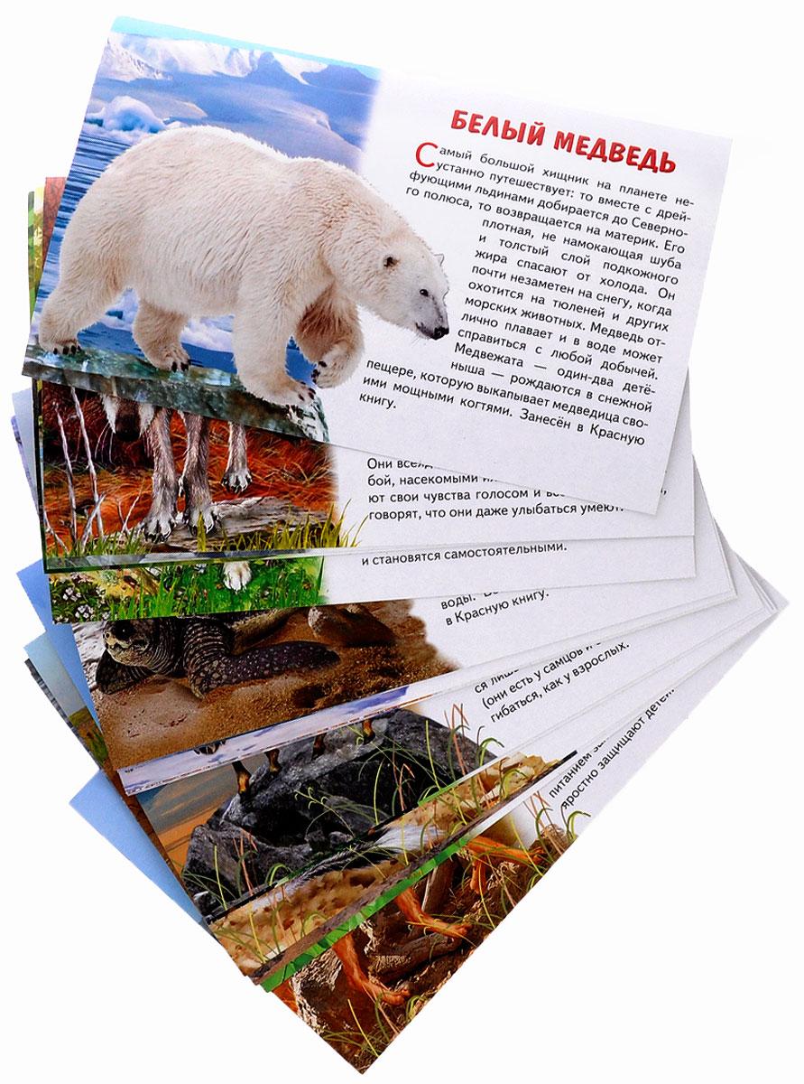 Животные Европы (набор из 16 карточек)