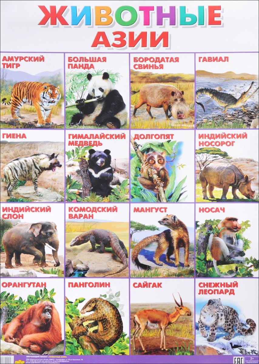 Животные Азии. Плакат