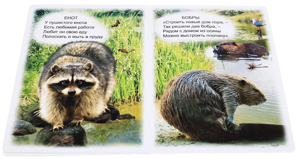 Любимые стихи о животных