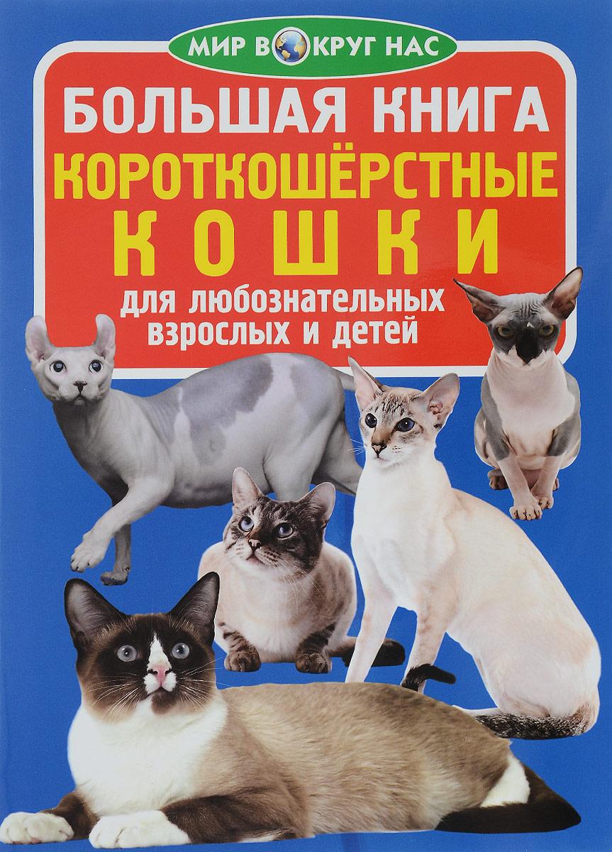 Большая книга. Короткошерстные кошки