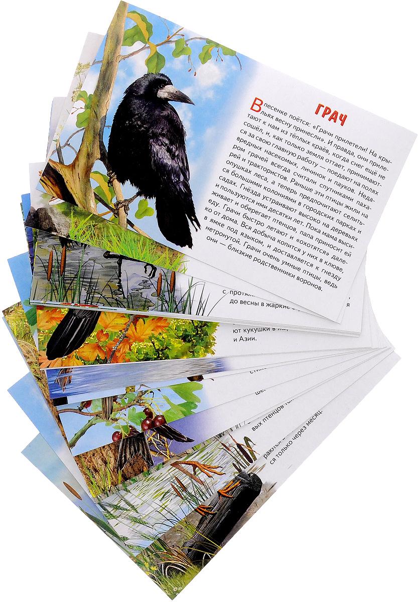Литур.Обуч.карт.Перелетные птицы России (3+)