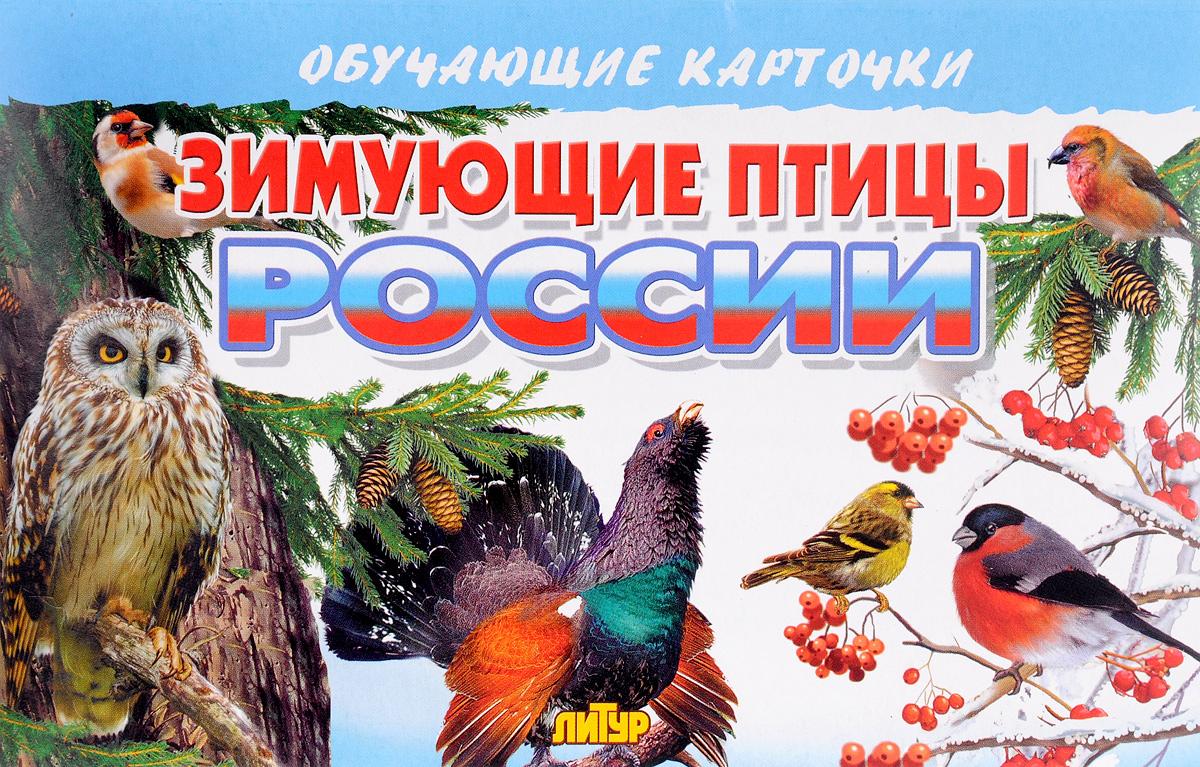 Литур.Обуч.карт.Зимующие птицы России (3+)