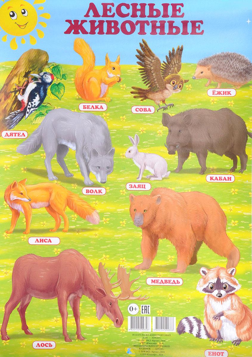 Лесные животные. Плакат