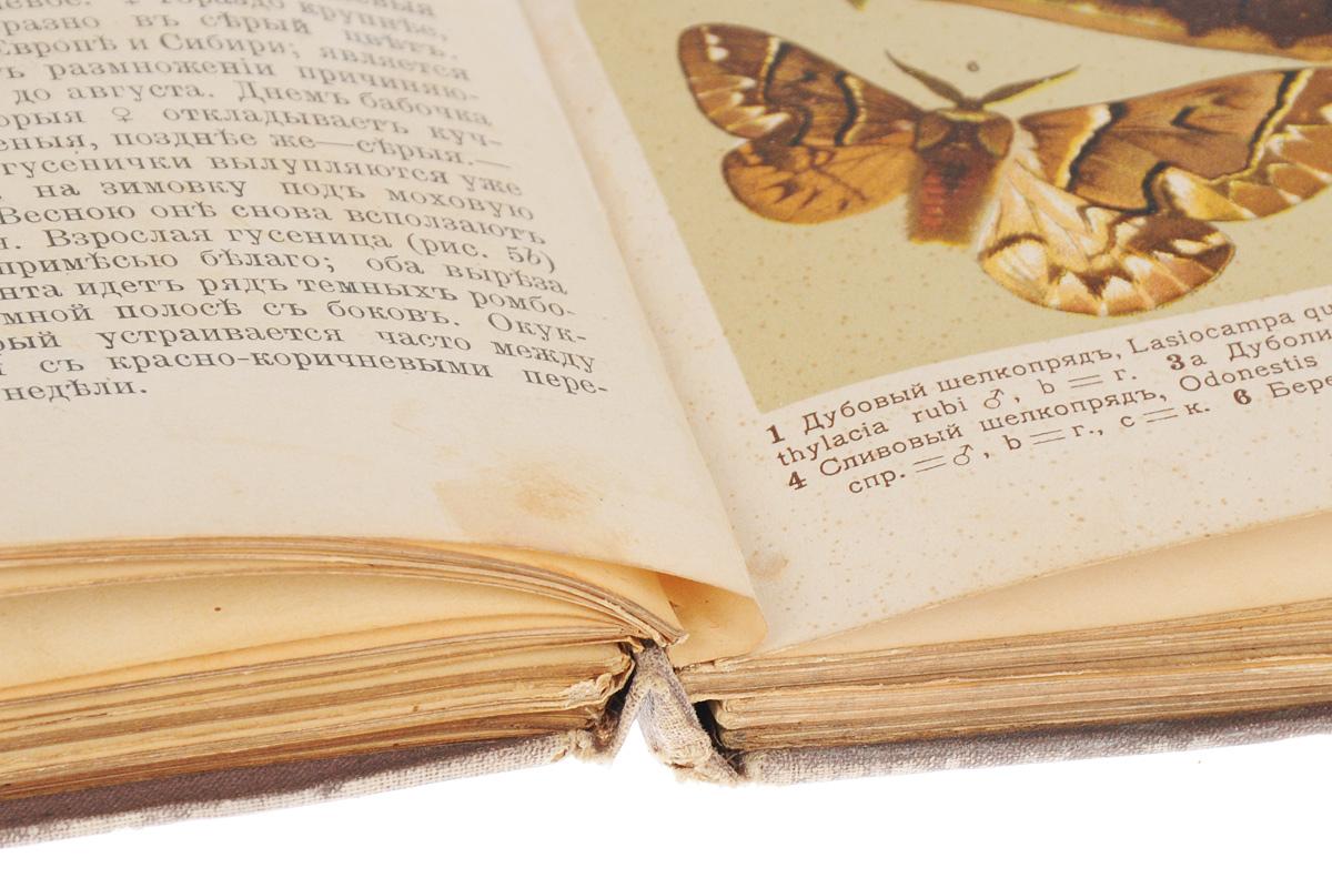 Маленький атлас бабочек для начинающих собирателей