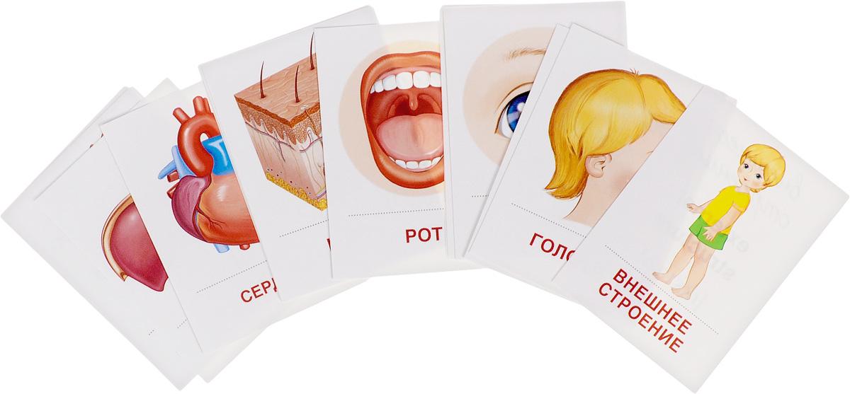 Тело человека (набор из 16 раздаточных карточек)