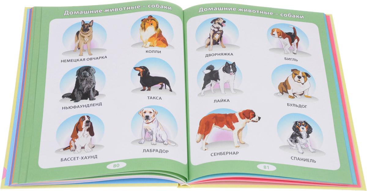Детская энциклопедия для тех, кто еще не читает. От 6 месяцев до 3 лет