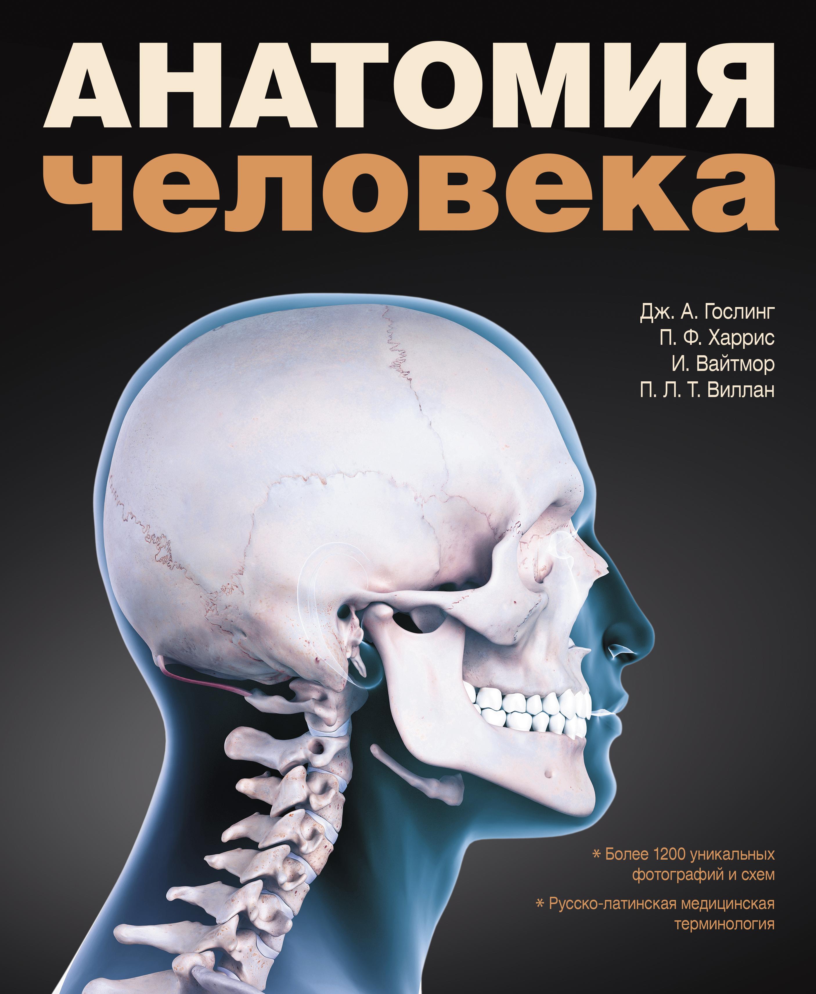 схема анатомии человека женщина