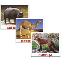 Комплект карточек Дикие животныеВСПБК-ДикЖКомплект Дикие животные содержит 20 карточек с изображением разнообразных животных и предназначен для занятий с детьми. Просмотр таких карточек позволяет ребенку быстро усвоить названия животных, запомнить, как они пишутся, развивает у него интеллект и формирует фотографическую память. Карточки животных намеренно сделаны не на белом фоне, а в естественной среде обитания, поскольку такие карточки не только гораздо эстетичнее, но и дают малышам представление об образе жизни животного. Лишних деталей, мешающих восприятию, на картинках нет.
