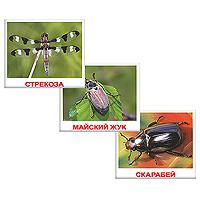 Комплект карточек НасекомыеВСПБК-НасекомыеКомплект Насекомые содержит 20 карточек с изображениями разных насекомых и предназначен для занятий с детьми. Просмотр таких карточек позволит ребенку познакомиться с различными видами насекомых, разовьет у него интерес к окружающему миру. Фотографии с изображениями насекомых намеренно сделаны не на белом фоне, а в естественной среде обитания, чтобы дать малышам представление об образе жизни насекомых. Лишних деталей, мешающих восприятию, на картинках нет.