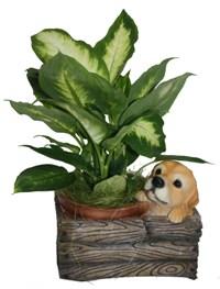 Кашпо декоративное Щенок. НА08116HA08116Кашпо для цветов представляет собой декоративную вазу, выполненную в виде деревянного ящика и сидящего в нем щенка. Ваза предназначена для установки внутрь цветочных горшков с растениями. Кашпо, выполненные из полистоуна, обладают долговечностью и износостойкостью. Эти изделия не потеряют яркости красок и четкости форм даже после длительной эксплуатации. Кашпо часто становятся последним штрихом, который совершенно изменяет интерьер помещения или ландшафтный дизайн сада. Благодаря такому кашпо вы сможете украсить вашу комнату, офис, сад и другие места. Характеристики: Материал: полистоун. Размер отверстия для горшка: 14 см х 14 см. Общий размер кашпо: 18,5 см х 21 см х 15 см. Размер упаковки: 22,5 см х 17,5 см х 18 см. Артикул: HA08116. Производитель: Китай. Внимание! Уважаемые клиенты, обращаем ваше внимание на тот факт, что кашпо поставляется без цветов.