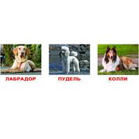 Комплект карточек Породы собак1748Комплект карточек Породы собак содержит 20 красочных карточек с фотографиями собак для занятий с детьми от рождения до 8 лет. Просмотр таких картинок развивает у ребенка интеллект и формирует фотографическую память. В набор вошли фотографии собак разных пород: пекинес, чихуахуа, далматин, лабрадор, ротвейлер, доберман, бультерьер, сенбернар, дог, бигль, колли, такса, пудель, боксер, чау-чау, шарпей, кокер-спаниель, немецкая овчарка, английский бульдог, йоркширский терьер. На обратной стороне каждой карточки напечатано: 10 занимательных фактов, 3 задания для ребенка, 1 загадка. Занятия с ребенком превратятся в интересную игру! Взрослые смогут подчерпнуть и открыть для себя много новых и увлекательных фактов о каждой породе собак! Характеристики: Размер карточки: 19,5 см х 16,5 см. Рекомендуемый возраст: от рождения до 8 лет.