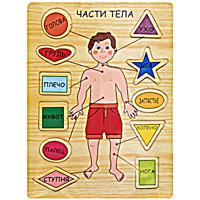 Развивающая игра-пазл Части телаф21-1475Развивающая игра-пазл Части тела, изготовленная из клееной фанеры, состоит из игрового поля-основы и 11 геометрических фигурок с названием частей тела. Для каждой фигурки в основе есть углубление, которое подходит только для нее, ребенку надо правильно расставить все фигурки на свое место. Игра позволит Вашему ребенку изучить все части тела, а также разовьет логическое мышление, мелкую моторику рук и сообразительность. Характеристики: Размер основы: 21,5 см х 29,5 см.