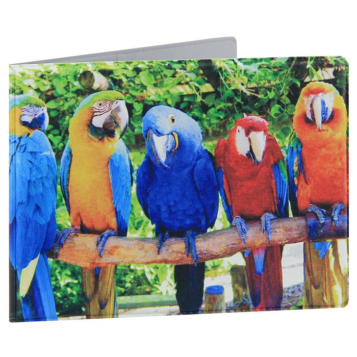 Попугаи, фото попугаи, красивые птицы.
