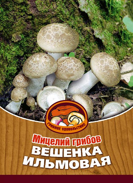 Мицелий грибов Вешенка ильмовая, 16 древесных палочек10031Вешенка ильмовая - изумительный гриб. Он отлично смотрится на столе не только из-за своего белоснежного цвета, но и за счет внушительных размеров - его шляпка доходит до 18 см в диаметре! Благодаря мицелию грибов Вешенка ильмовая теперь вы без труда сможете вырастить любимые грибы у себя в саду или дома. И уже через год после посадки у вас появится первый урожай грибов. За один год можно собрать от 3 до 6 кг грибов с каждого бревна. Для того чтобы вырастить грибы вам понадобится: мицелий Грибное удовольствие, бревно лиственных пород (лучше всего береза, вяз, осина), дрель. Благоприятное время для посадки мицелия Вешенка ильмовая - в природных условиях с апреля по октябрь, в помещении - круглый год. Плодоносят мицелии в среднем от 3 до 5 лет, в зависимости от сорта грибов. Характеристики: Материал: древесная палочка. Размер упаковки: 11 см х 15,5 см. Артикул: 10031.