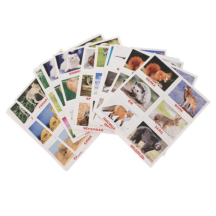 Лото ЖивотныеВСП-ЖивотныеЛото Животные - увлекательная и обучающая игра для малышей от одного года. Подбирая яркие картинки, в процессе игры дети не только запоминают названия и написание животных, но и тренируют мелкую моторику рук. В набор входят 20 игровых карточек, каждая из которых содержит по шесть картинок с изображением различных животных и правила игры. Перед игрой необходимо взять по одной карточке из каждой пары и по контуру разрезать ее на шесть частей. Играя вдвоем с ребенком, положите перед ним одно игровое поле и по очереди давайте карточки-рифмы, предлагая ребенку найти правильное место для размещения каждой карточки. Лото Животные также можно использовать для других игр. Игра развивает интеллект, внимание, фотографическую память и мелкую моторику рук. Характеристики: Размер игрового поля: 15,5 см х 18,5 см. Размер карточки: 8 см х 6 см.