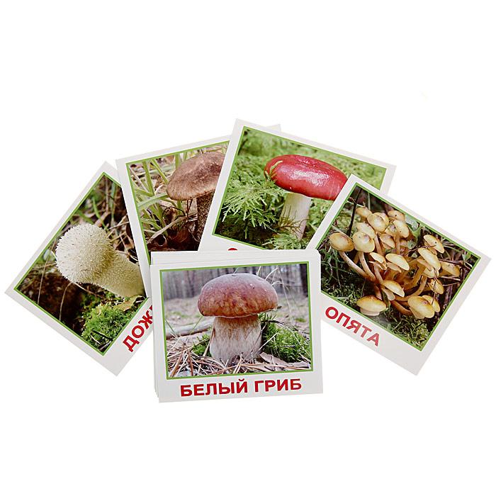 Набор обучающих карточек Мини-грибы00-160Набор обучающих карточек Мини-грибы включает в себя 20 карточек и предназначен для занятий с детьми. На карточках изображены грибы и написаны их названия. Просмотр карточек позволит ребенку усвоить тему Грибы, запомнить, как пишутся слова, развить у ребенка интеллект и фотографическую память, что в дальнейшем значительно повысит его способности к обучению.
