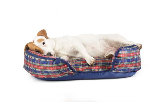 Лежак для собак Titbit, ортопедический, с наполнителем из лузги гречихи, 70 см х 45 см х 20 см1936Лежак Titbit обладает уникальными ортопедическими свойствами. Перераспределяет нагрузку на мышцы и суставы о время сна. Способствует быстрому восстановлению физической формы животного. Обладает теплоизоляционными качествами. Лузга гречихи природный гипоаллергенный материал, уникальный по своим качествам. Благодаря ее структуре лежак принимает удобную форму для животного и обеспечивает полноценный отдых. Наполнитель: лузга гречихи, синтепон.