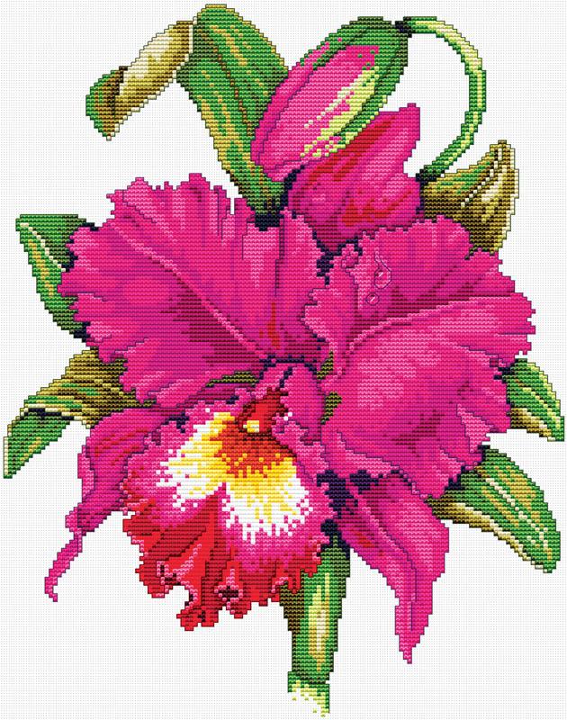 Набор для вышивания крестом Розовый ирис, 35 х 41 см6005-14В наборе для вышивания крестом Розовый ирис есть все необходимое для создания роскошной интерьерной картины: хлопковая аппретированная канва Аида-14 с обработанным краем, белого цвета, цветная символьная схема вышивки, 2 иглы, нитки мулине (100% хлопок), инструкция по вышиванию на русском языке. Необычайной красоты рисунок-вышивка, выполненный в виде изображения прекрасного цветка на белом фоне, привлечет к себе внимание и будет потрясающе смотреться в интерьере вашего помещения. Вышивание крестом отвлечет вас от повседневных забот и превратится в увлекательное занятие! Работа, сделанная своими руками, создаст особый уют и атмосферу в доме и долгие годы будет радовать вас и ваших близких.