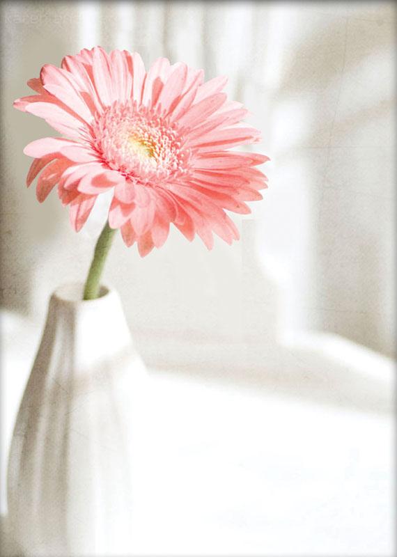 Набор для вышивания крестом Розовая гербера, с 3D-эффектом, 37 х 48 см7010-3DНабор для вышивания с 3D-эффектом Розовая гербера - необычайной красоты рисунок-вышивка с изображением герберы, который привлечет к себе внимание и будет потрясающе смотреться в интерьере вашего помещения. На канве напечатан фоновый рисунок и на незаполненные фоном части нанесена схема для вышивки. Краска, используемая для нанесения схемы водорастворимая и после завершения работы достаточно слегка постирать и отгладить вышивку. В наборе: - канва Аида 11 хлопковая, белого цвета, с нанесенным рисунком и схемой вышивки, - хлопковые нитки мулине, - 2 иглы, - цветная символьная схема вышивки на бумаге, - инструкция по вышиванию на русском языке. Для изготовления работы следует вышивать только отмеченные для этого детали. Не вышитая часть канвы остается с гладким печатным рисунком. Таким образом, создается эффект объемной вышивки, так называемый 3D-эффект.
