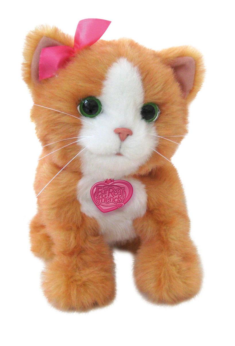 FurReal Friends Интерактивная игрушка Игривый котенок ДэйзиA2003E35Анимированная игрушка FurReal Friends Игривый котенок Дэйзи привлечет внимание не только ребенка, но и взрослого. Игривый котенок Дэйзи прыгает и шевелит лапками если перед ним помахать его игрушкой пушистой метелочкой, с которой Дэйзи обожает играть, проведите ей перед глазками Дэйзи и она будет лапками тянуться к ней.Когда кошечка видит вас и понимает, что вы рядом она начинает перебирать своими лапками и призывно мяукать предлагая поиграть с ней. Стоит нажать Дэйзи на спину или на переднюю правую лапу он начнет мурлыкать, а если нажать 2 раза подряд - промяукает вам песенку! Дэйзи умеет издавать множество разнообразных звуков, так что даже сложно поверить, что он неживой!. Ваш ребенок сможет заботиться о ней, как о настоящем малыше! Благодаря небольшому размеру игрушку можно брать с собой в гости или на прогулку. Высота котенка в положении стоя: 32 см. Детям от 4 лет до 10 лет. Необходимо докупить 4 батареи напряжением 1,5V типа АА (LR6) (не...