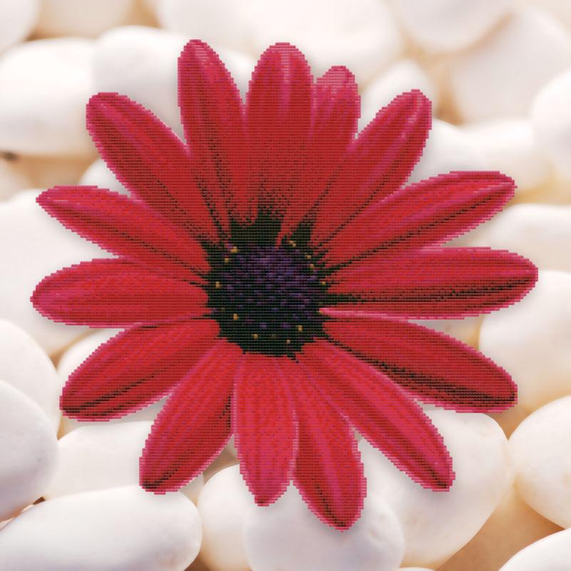 Набор для вышивания крестом Алый цветок, 48 х 48 см7005-3DКрасивый и стильный рисунок-вышивка, выполненный на канве, выглядит оригинально и всегда модно. В наборе для вышивания Алый цветок есть все необходимое для создания собственного чуда: канва, специальные нити, игла и схема рисунка. Краска, используемая для нанесения схемы-водорастворимая. 3D картинка. Работа, сделанная своими руками, создаст особый уют и атмосферу в доме и долгие годы будет радовать вас и ваших близких. Ведь вы выполните вышивку с любовью!