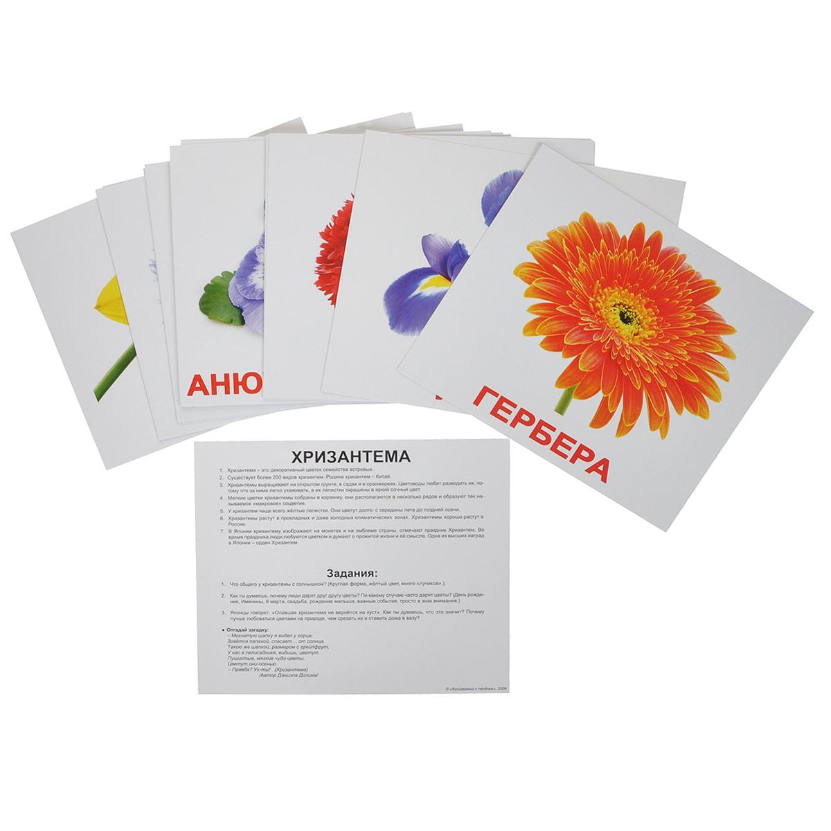 Набор обучающих карточек ЦветыВСПБК-ЦветыНабор обучающих карточек Цветы предназначен для занятий с детьми. Он содержит 20 карточек с изображениями различных цветов с подписями, а также фактами и заданиями на обратной стороне карточек. Просмотр таких карточек позволяет ребенку быстро усвоить названия цветов, запомнить, как они пишутся, развивает у него интеллект и формирует фотографическую память.