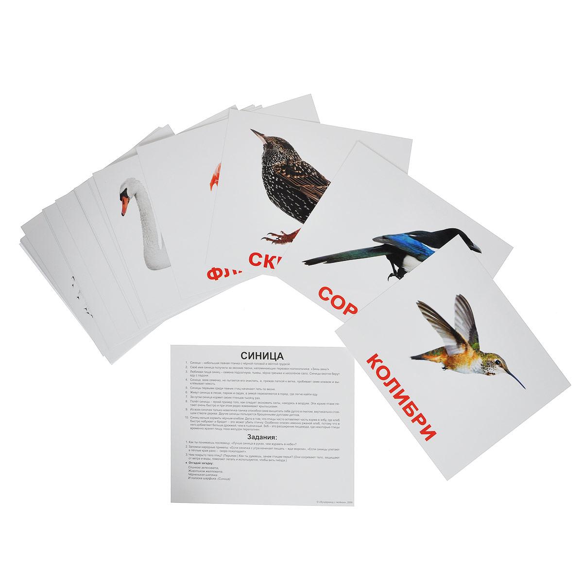 Набор обучающих карточек ПтицыВСПБК-ПтицыНабор обучающих карточек Птицы предназначен для занятий с детьми. Он содержит 20 карточек с изображениями различных птиц с подписями, а также фактами и заданиями на обратной стороне карточек. Просмотр таких карточек позволяет ребенку быстро усвоить названия птиц, запомнить, как они пишутся, развивает у него интеллект и формирует фотографическую память.