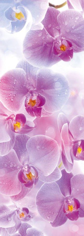 Фотообои Твоя Планета Premium. Поэма цвета: Орхидеи, 4 листа, 97 х 272 см4607161056875Основа фотообоев Твоя Планета Premium. Поэма цвета: Орхидеи - импортная бумага высокого качества и повышенной плотности с нанесенным на неё цветным фотоизображением. Технология сборки фрагментов в единую картину довольно проста. Это наиболее распространенный вид обоев, позволяющих создать в квартире (комнате) определенное настроение и даже несколько расширить оптический объем. Фотообои пользуются популярностью потому, что они недорогие и при этом позволяют получить массу удовольствий при созерцании изображения. Количество листов: 4. Размер (ШхВ): 97 см х 272 см.