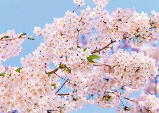 Фотообои Твоя Планета Премиум Весна 272 х 194 см, 8 листов4607161056189Основа фотообоев Твоя Планета Премиум - импортная бумага высокого качества и повышенной плотности с нанесенным на неё цветным фотоизображением. Технология сборки фрагментов в единую картину довольно проста. Это наиболее распространенный вид обоев, позволяющих создать в квартире (комнате) определенное настроение и даже несколько расширить оптический объем. Фотообои пользуются популярностью потому, что они недорогие и при этом позволяют получить массу удовольствий при созерцании изображения.