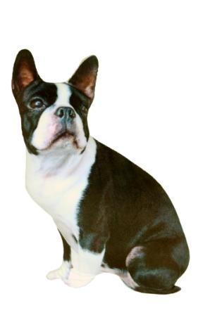 СмолТойс Игрушка подушка-антистресс Собачка цвет черный белый2890/СР/35